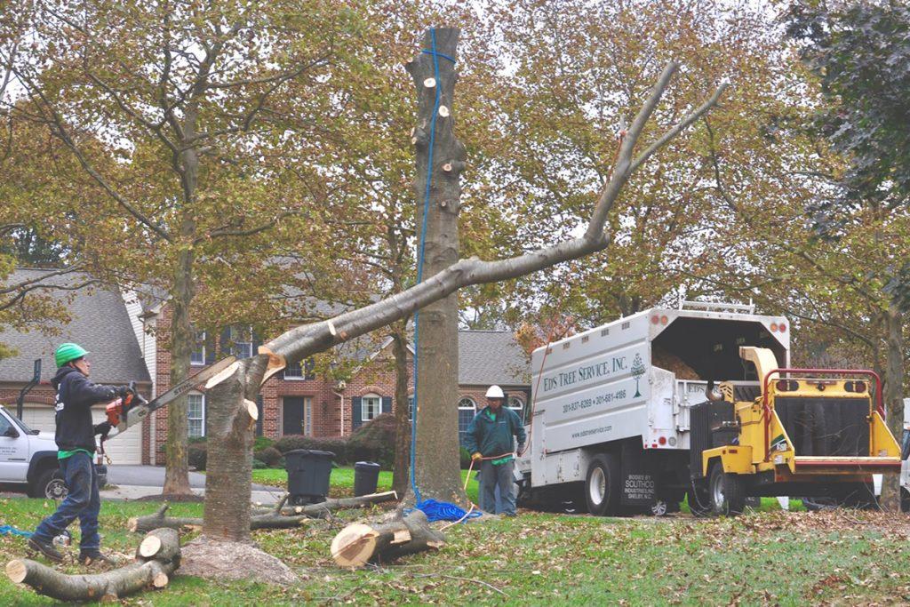 Tree Service Longmont